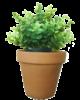 plante originale